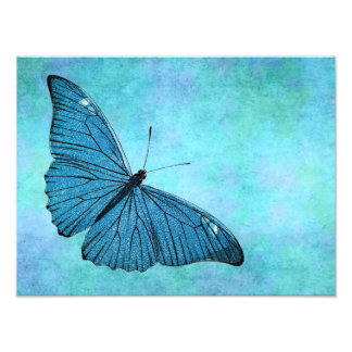 Vintage Teal Blue Butterfly 1800s Illustration Photo Print