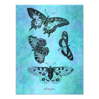 Vintage Teal Blue Butterfly Drawing - Butterflies Photograph