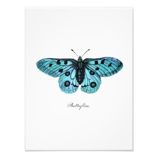 Vintage Teal Blue Butterfly Illustration - 1800's Photo Print