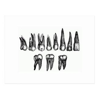 Vintage Teeth Postcard