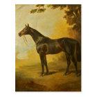 Vintage Thoroughbred Horse Postcard
