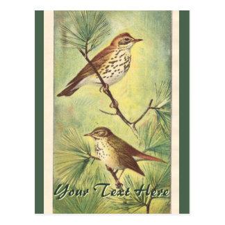 Vintage Thrushes Postcard