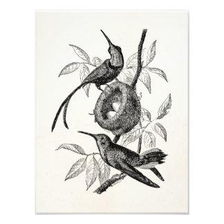 Vintage Topaz Hummingbirds Nest Personalized Birds Photo Print