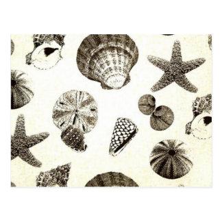 vintage tropical beach seashell wedding postcard