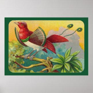 Vintage Tropical Bird Print