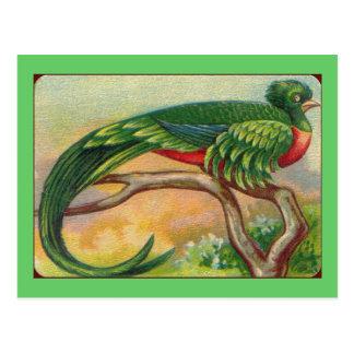 Vintage Tropical Bird Print Postcard