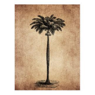 Vintage Tropical Island Palm TreeTemplate Blank Postcard