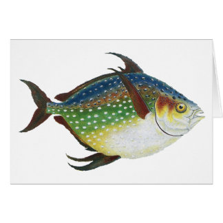 Vintage Tropical Opah Fish, Marine Aquatic Animal Card