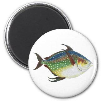 Vintage Tropical Opah Fish, Marine Aquatic Animal Magnet