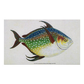 Vintage Tropical Opah Fish, Marine Aquatic Animal Poster