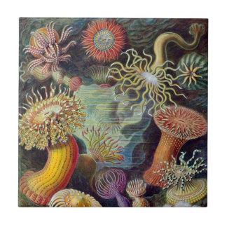 Vintage Underwater Sea Anemones by Ernst Haeckel Ceramic Tile
