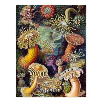 Vintage Underwater Sea Anemones by Ernst Haeckel Postcard