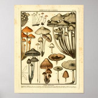 Vintage Varieties of Brown Mushrooms French Print
