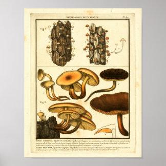 Vintage Varieties of Mushrooms French Art Print
