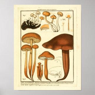 Vintage Variety of Brown Mushrooms French Print