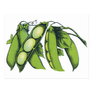 Vintage Vegetables; Lima Beans, Organic Farm Foods Postcard