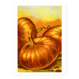 Vintage Vegetables Yellow Heirloom French Onions Postcard