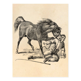 Vintage Vicious Biting Horse Template Postcard