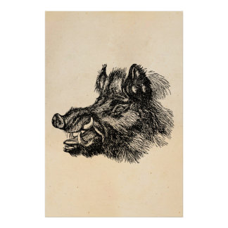 Vintage Vicious Wild Boar w Tusks Template Posters