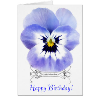 Vintage Viola Greeting Card