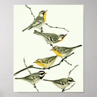Vintage Warbler Bird Poster Print #1