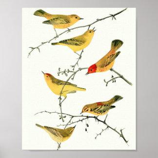 Vintage Warbler Bird Poster Print #2