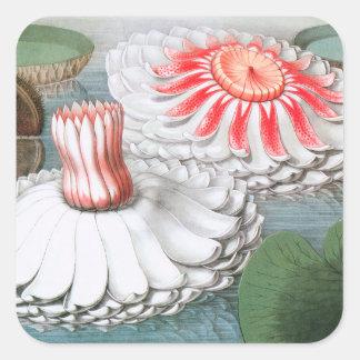 Vintage Waterlilies Flowers in a Garden Pond Square Sticker