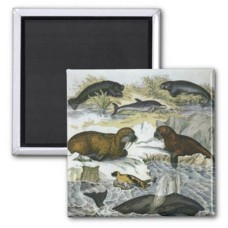 Vintage Whales, Walruses and Seals, Marine Animals Square Magnet