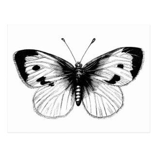 Vintage White Cabbage Butterfly Illustration Postcard