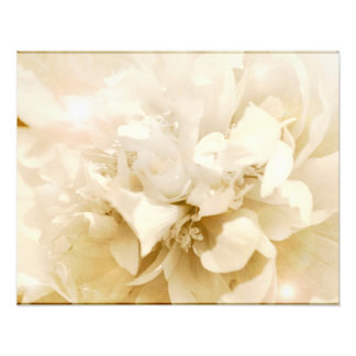 Vintage White Dahlia Flower Floral Photo
