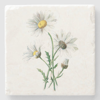 Vintage White Daisy Flower Illustration Floral Stone Coaster