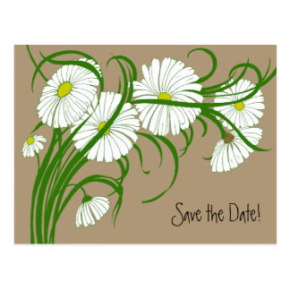 Vintage White Gerber Daisy Flowers Save the Date Postcard