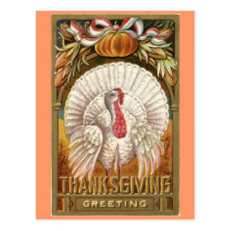 Vintage White Thanksgiving Turkey Postcard
