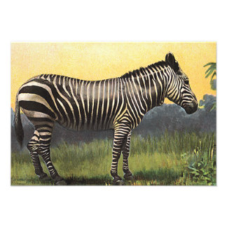 Vintage Wild Animal Zebra in the African Savannah Custom Invitation