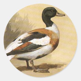 Vintage Wild Animals Birds, Mallard Duck Classic Round Sticker
