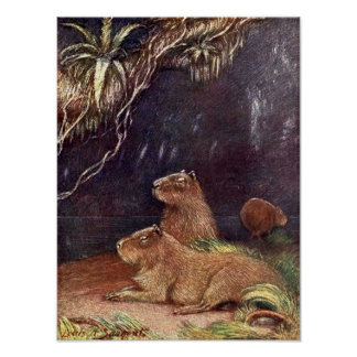 Vintage Wild Animals, Capybara by Louis Sargent Poster