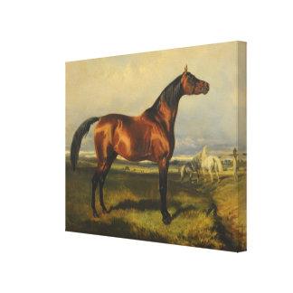 Vintage Wild Horses by Alfred de Dreux Canvas Print