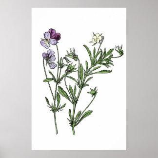 Vintage Wild Purple Pansies Print