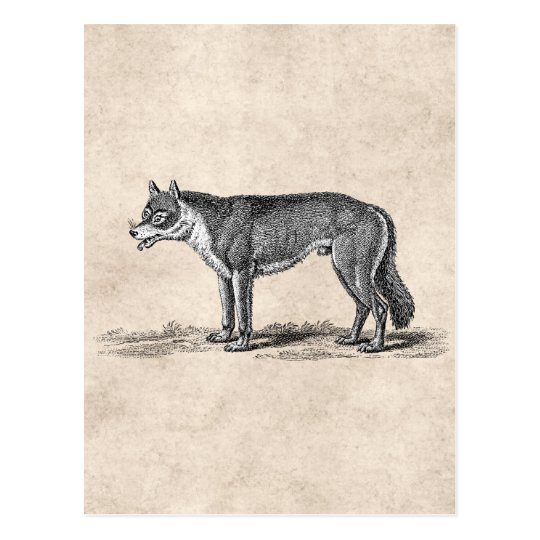 Vintage Wolf Illustration - 1800's Wolves Template Postcard