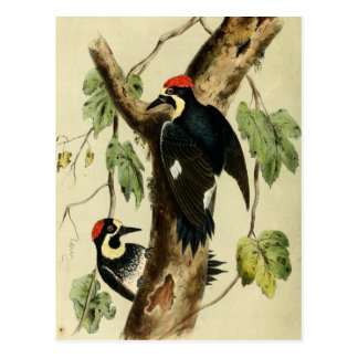 Vintage Woodpecker Bird Postcard
