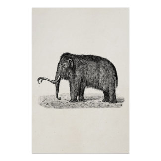 Vintage Woolly Mammoth Illustration Wooly Mammoths Poster