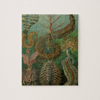 Vintage Worms Annelids Chaetopoda by Ernst Haeckel Puzzle
