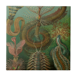 Vintage Worms Annelids Chaetopoda by Ernst Haeckel Tiles