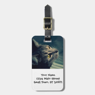 Vintage Yellow-Eyed Cat looking up Above Luggage Tag