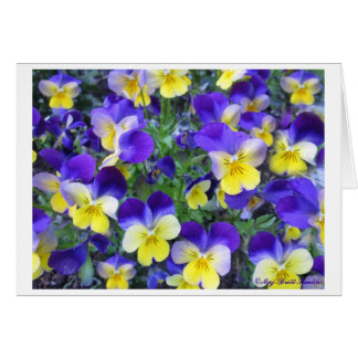 Viola cornuta card