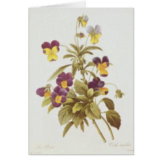 Viola Tricolour Card