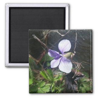 violet 1 magnet