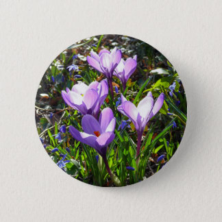 Violet crocuses 02.0, spring greetings 2 inch round button