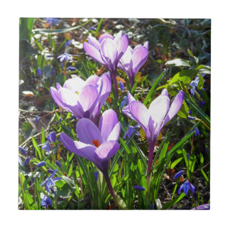 Violet crocuses 02.0, spring greetings ceramic tile