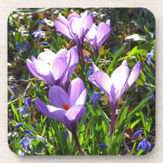 Violet crocuses 02.0, spring greetings coaster
